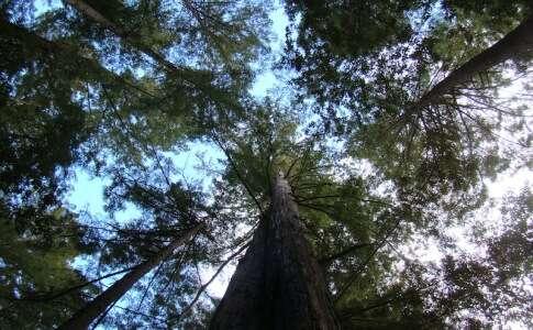 Big Basin Red Woods Park