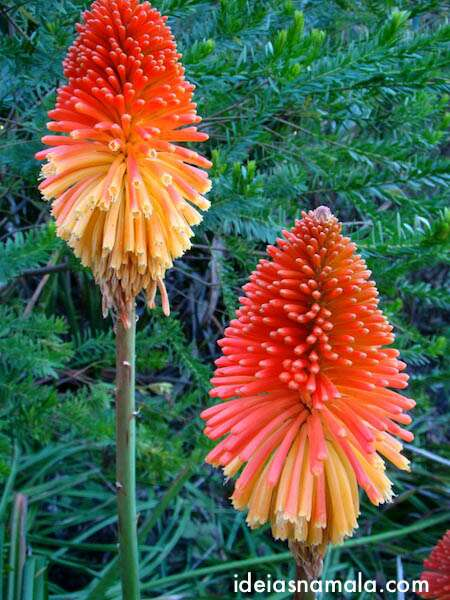 jardim botânico - Golden Gate Park