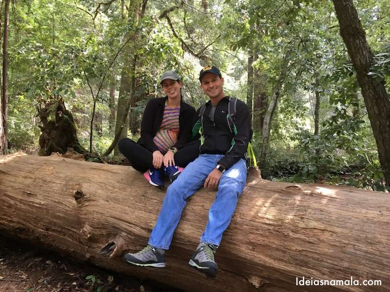 Redwood Big Basin Park