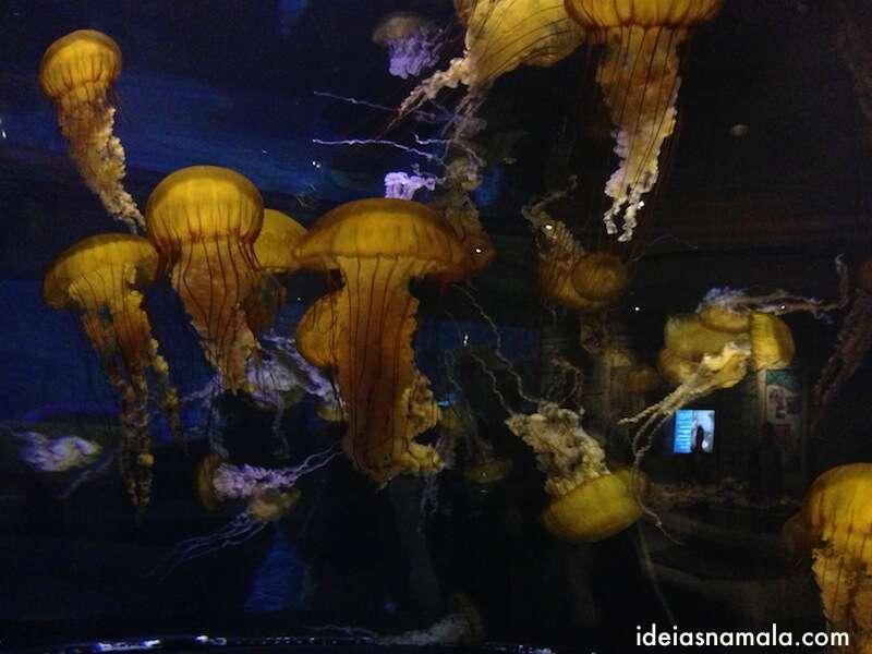 águas vivas no aquário do Mandalay Bay