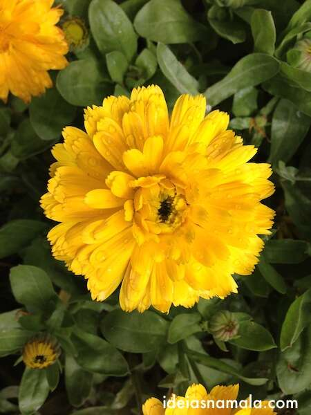 Flores no parque Capricho - Madri