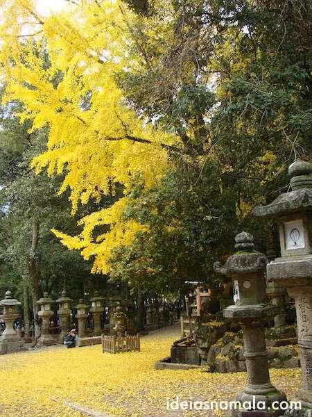 Kasuga Taisha no outono