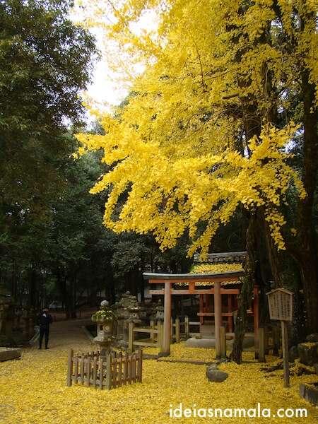 Folhas amarelas em Nara