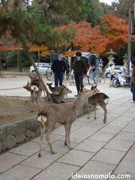 Parque de Nara com bambis no outono