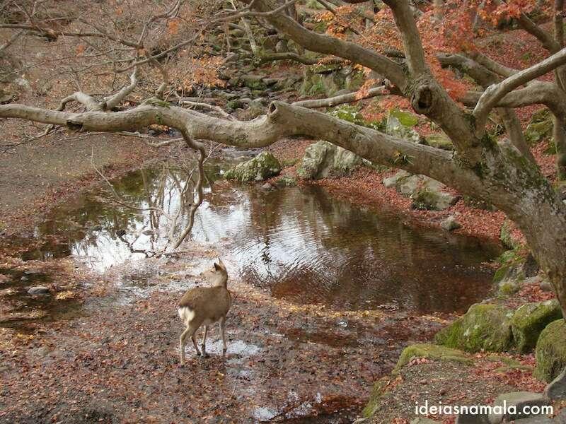 O bambi e as folhas coloridas, Nara