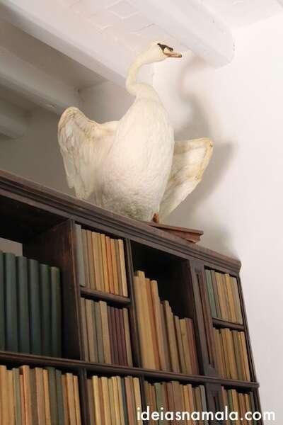 Ganso na casa de Dalí - Port Lligat