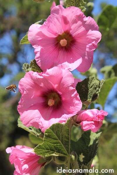 Flores em Yountville