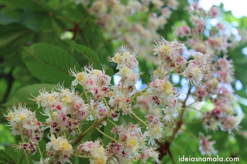 Arvore florida no parque do retiro