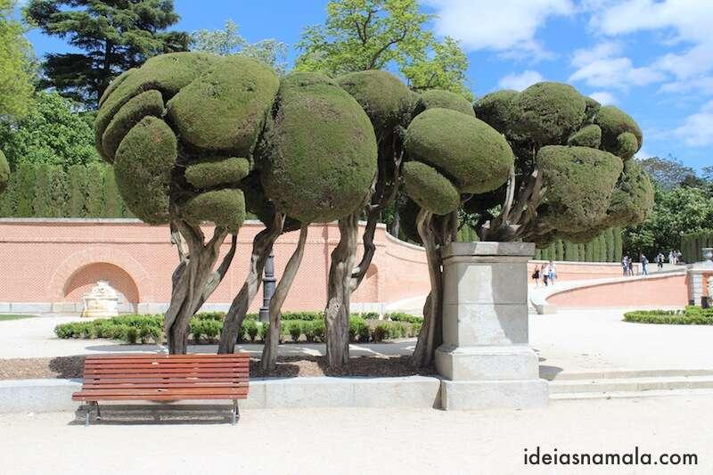 Arvore estilosa - Parque do Retiro