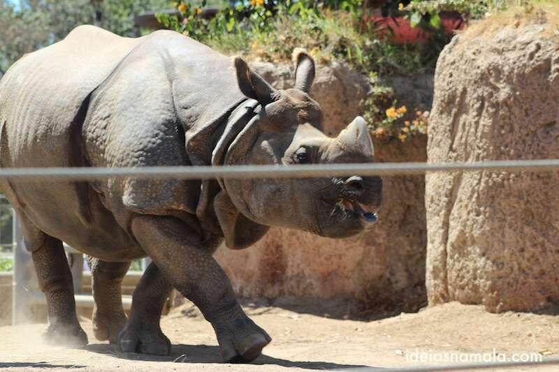 Rinoceronte - Zoológico de San Diego