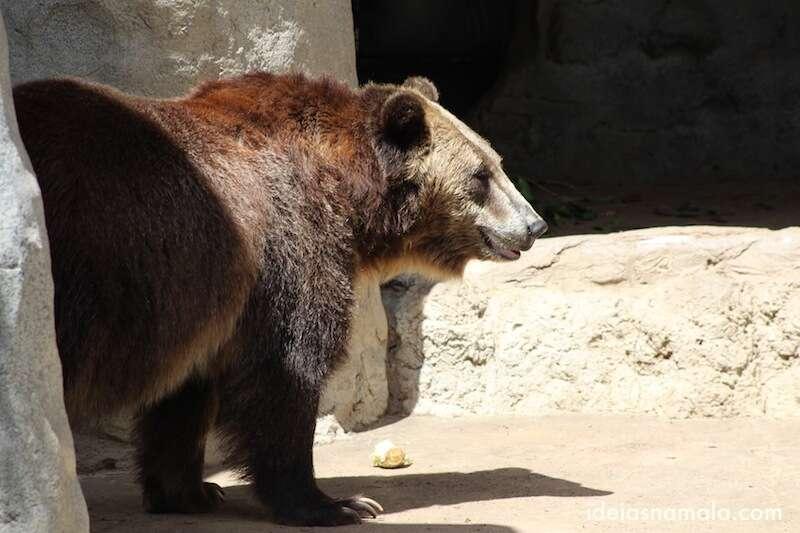 Urso - Zoológico de San Diego