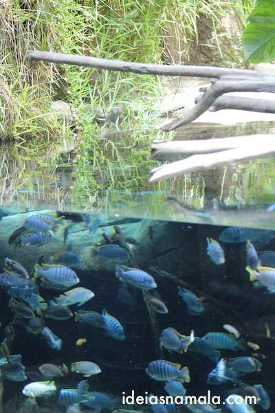 Peixes - zoo de San Diego