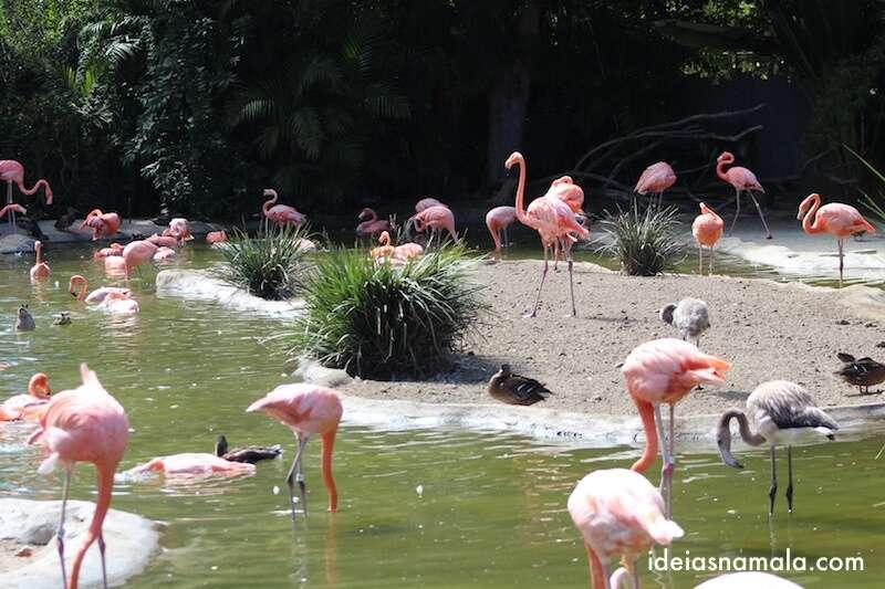 Flamingos - Zoológico de San Diego