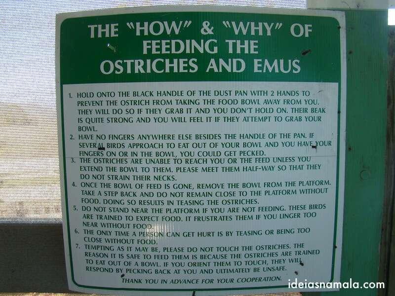 Como alimentar emas e avestruzes