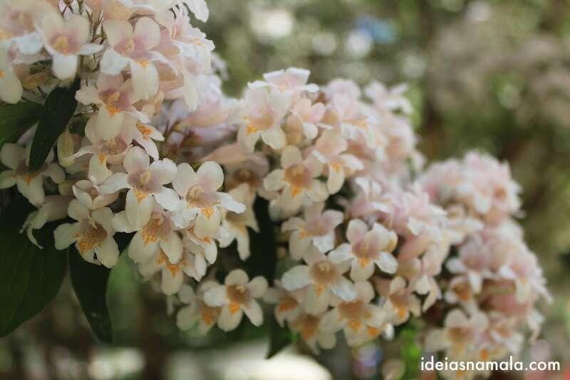 flor no Jardim Botânico Real de Madri