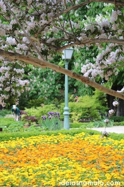 flores no Jardim Botânico Real de Madri