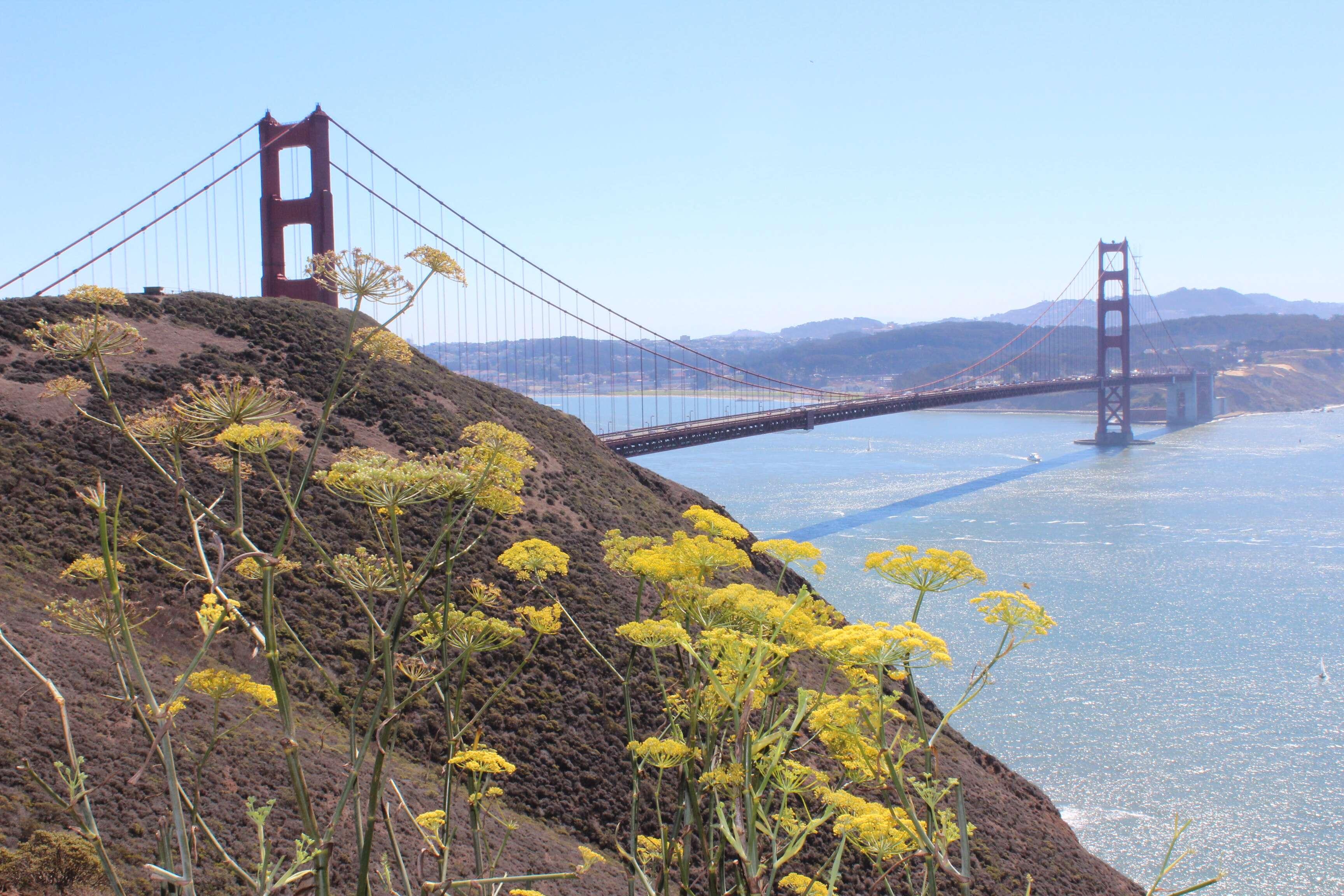 Flores quase do segundo mirante - Marin headlands