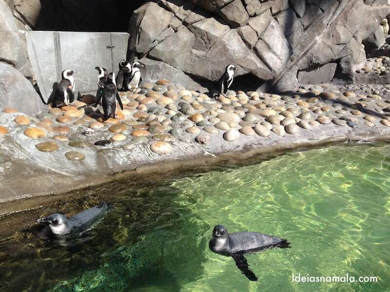 Pinguins - Six Flags