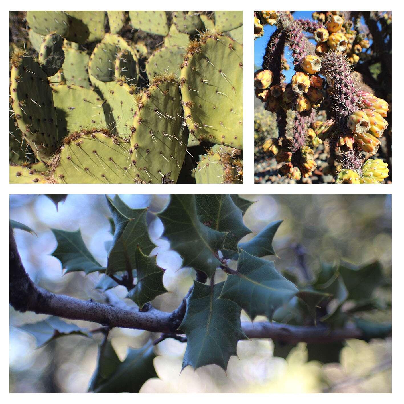Natureza em Sedona, Arizona