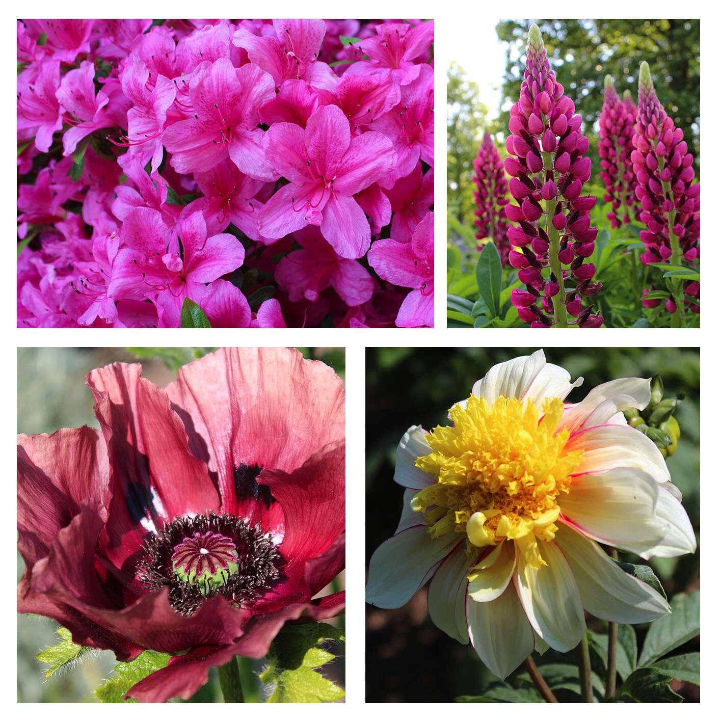 Jardins de Blarney