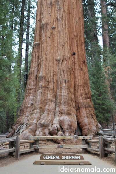 Sequoia gigante no Sequoias National Park