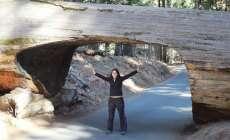 Yosemite Park ou Sequoias National Park