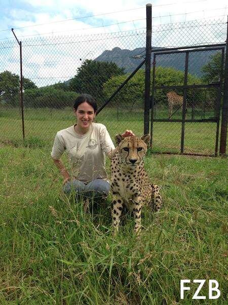 Cuidando de Animais na África do Sul
