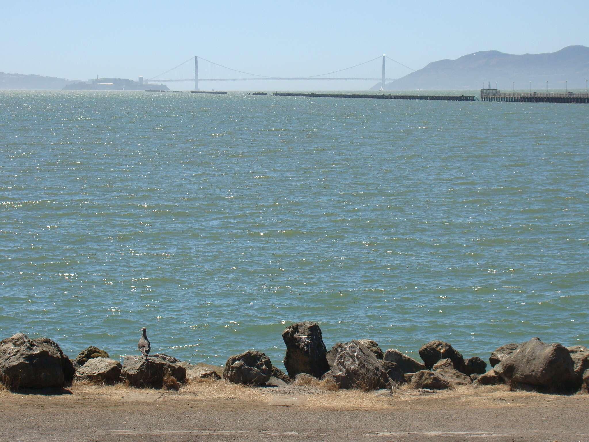 Golden Gate vista da Marina de Berkeley
