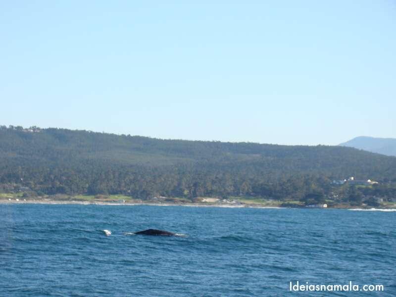 Baleia | Monterey