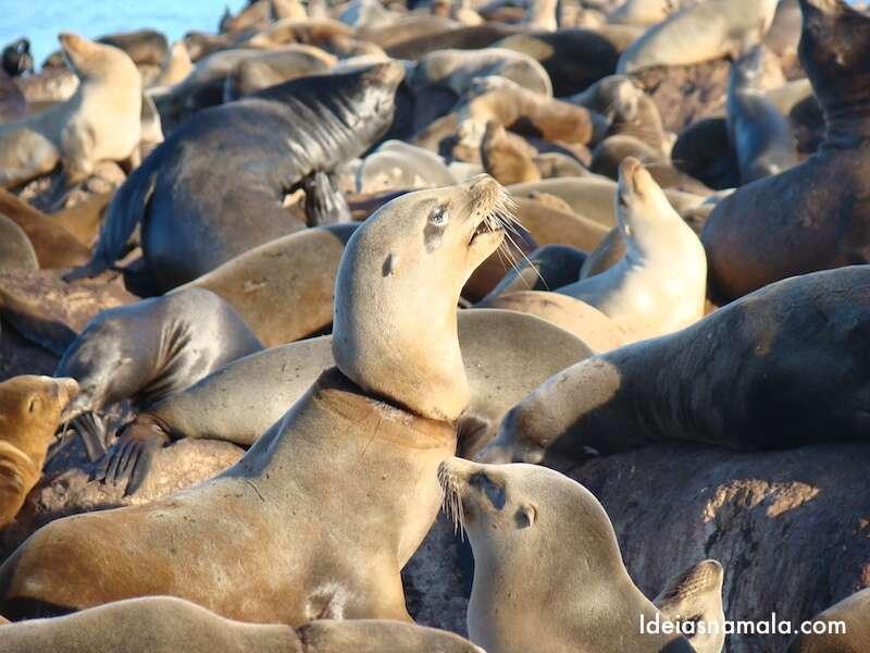 Leões marinhos - Monterey