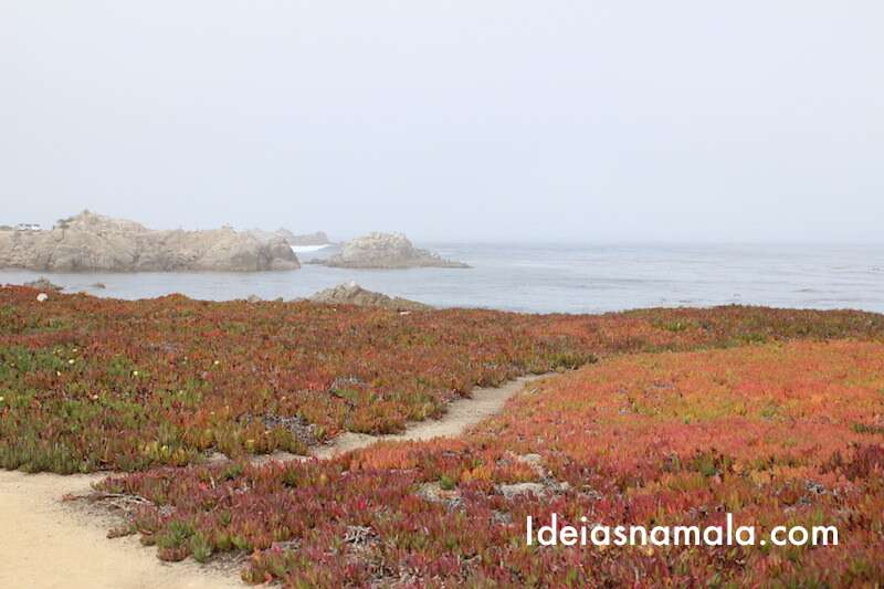 Flores na 17 Mile Drive