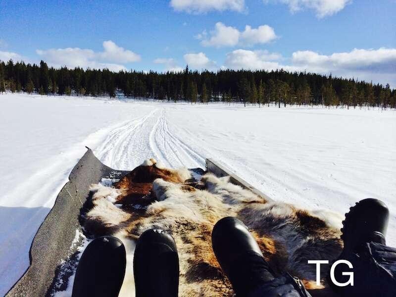 Trenó na Neve - suécia