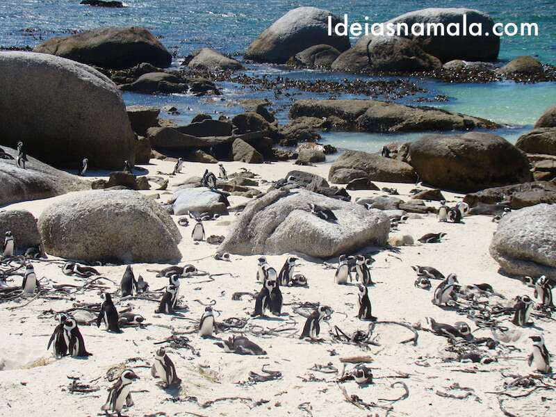 Pinguins na África do Sul
