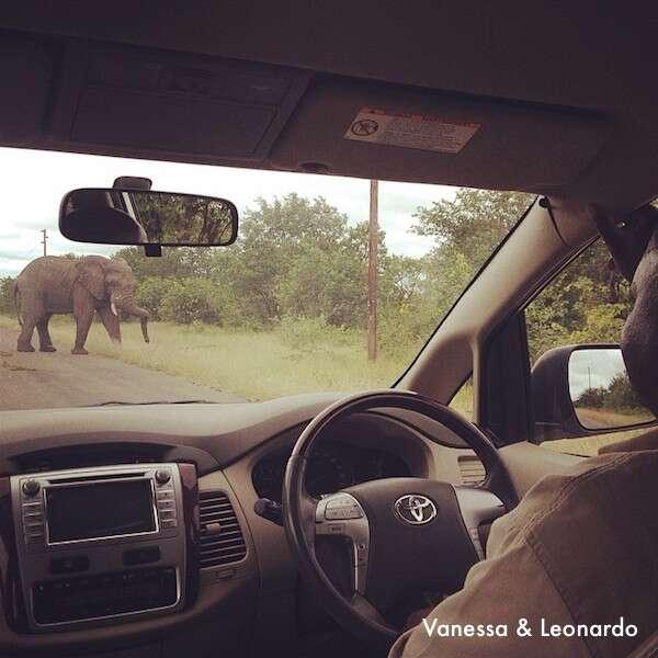 Elefante no caminho para o hotel