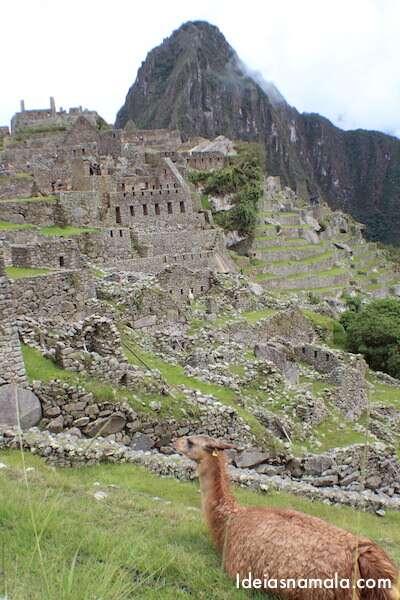 Llamas no Machu Picchu