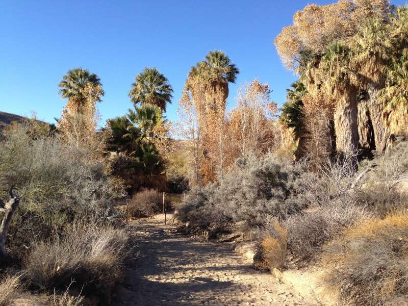Oasis - Joshua Tree National Park