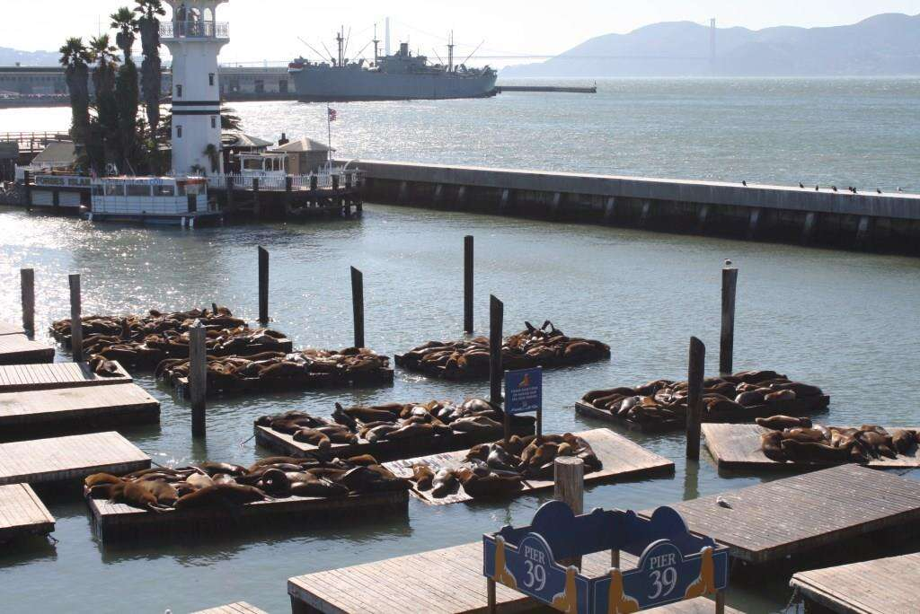 Focas Pier 39 - San Francisco