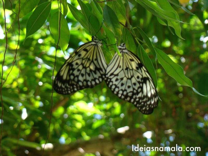 Fazenda de borboletas - St. Martin