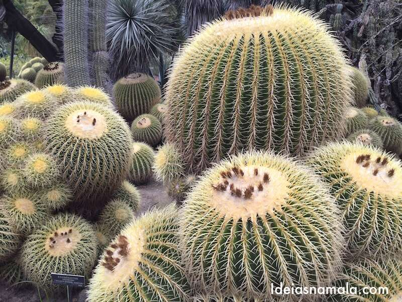 Huntington Gardens - Pasadena