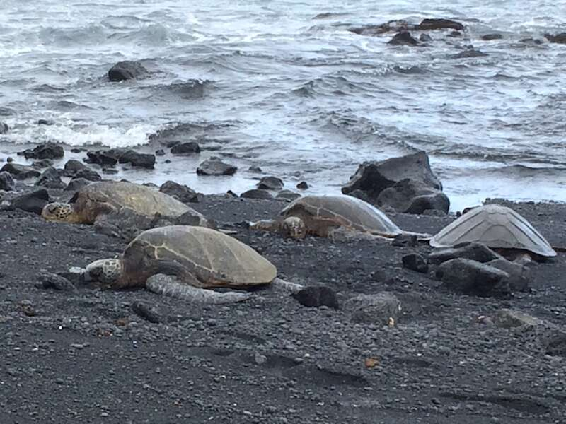 Tartarugas - Big Island