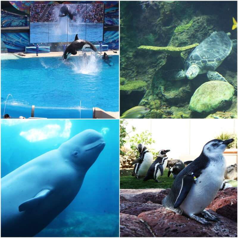 San-Diego-Sea-World-