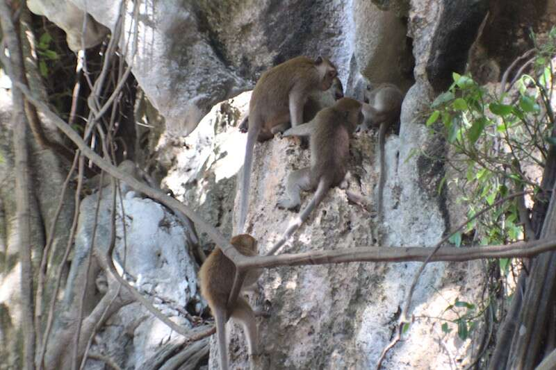 Macacos Railay Beach