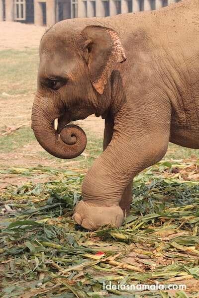 Filhote - Elephant Nature Park
