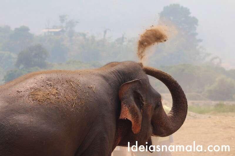 Protetor solar - Elephant Nature Park