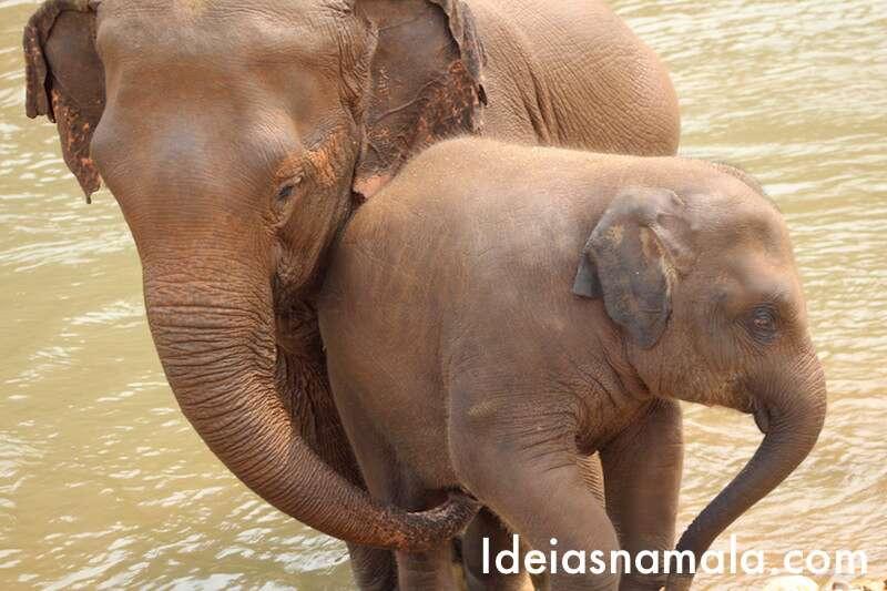 Mamãe e filhote -Elephant Nature Park