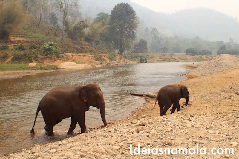 Banho - Elephant Nature Park