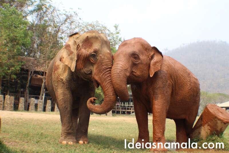 Elephant Nature Park - Tailândia