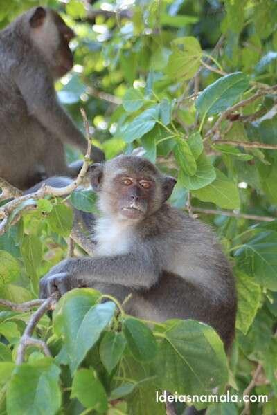 Monkey Beach - Koh Phi Phi - Tailândia