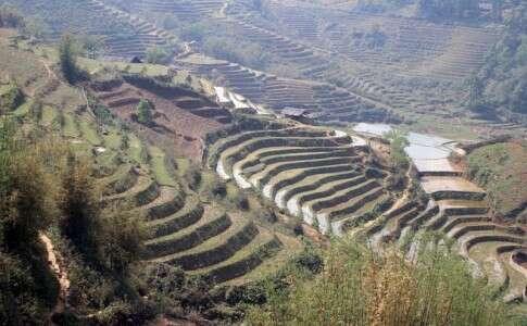 Plantações de Arroz em Sapa, norte do Vietnã