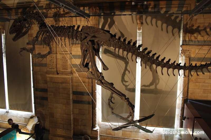 Museu de historia natural - Londres
